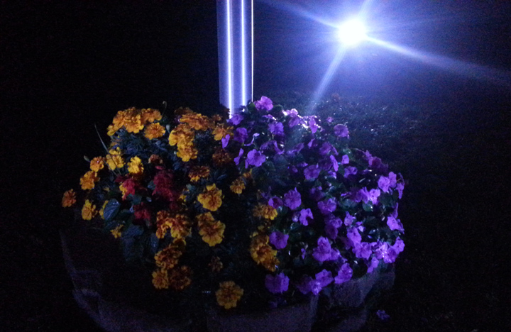 Solar LED Landscape Light